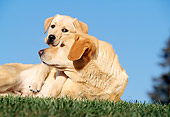 DOG 18 RK0023 10