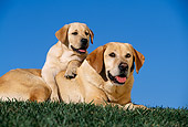 DOG 18 RK0023 22
