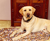 DOG 18 RK0032 02