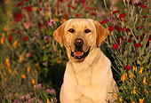 DOG 18 RK0038 20