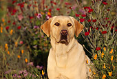 DOG 18 RK0038 21