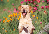 DOG 18 RK0058 02