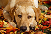 DOG 18 RK0074 16