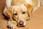 DOG 18 RK0083 03