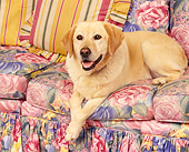 DOG 18 RK0088 04