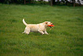 DOG 18 RK0121 06
