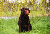 DOG 18 RK0126 03