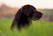 DOG 18 RK0142 01