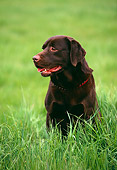 DOG 18 RK0143 10