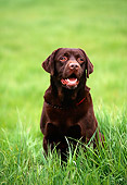 DOG 18 RK0143 13