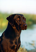 DOG 18 RK0169 02