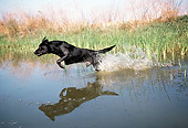 DOG 18 RK0177 05