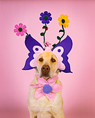 DOG 18 RK0192 02