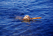 DOG 18 RK0199 03