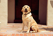 DOG 18 RK0210 03
