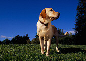 DOG 18 RK0214 03