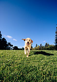 DOG 18 RK0216 07