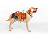 DOG 18 RK0219 03