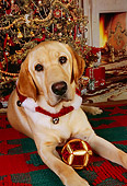 DOG 18 RK0221 07