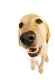 DOG 18 RK0225 01