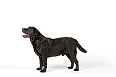 DOG 18 RK0239 01