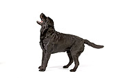 DOG 18 RK0240 01