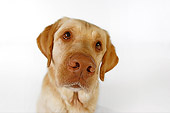 DOG 18 RK0243 01