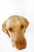 DOG 18 RK0244 01
