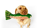 DOG 18 RK0253 01