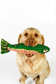 DOG 18 RK0254 01