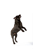 DOG 18 RK0259 01