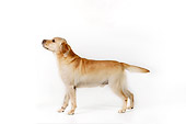 DOG 18 RK0263 01