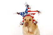 DOG 18 RK0268 01