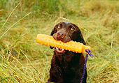 DOG 18 RK0316 04