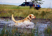 DOG 18 RK0323 35