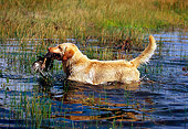 DOG 18 RK0327 01