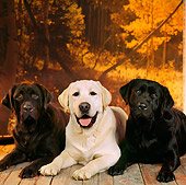 DOG 18 RS0011 01