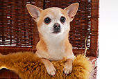 DOG 19 AC0005 01
