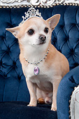 DOG 19 AC0006 01