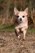 DOG 19 AC0008 01