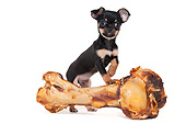 DOG 19 AC0009 01