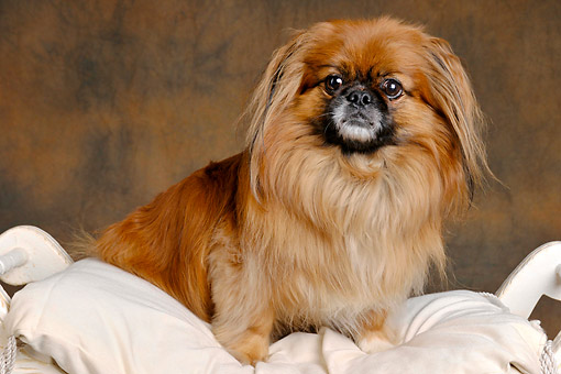 DOG 19 AC0012 01
