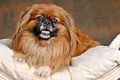 DOG 19 AC0013 01