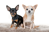 DOG 19 AC0014 01