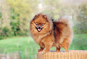 DOG 19 CB0002 01