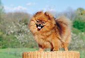 DOG 19 CB0003 01