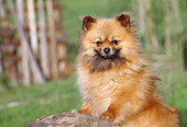 DOG 19 CB0005 01