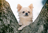 DOG 19 CB0006 01