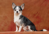 DOG 19 CB0008 01