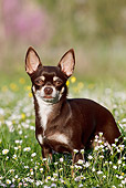 DOG 19 CB0010 01